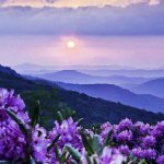 photo blue mountains purple flowers.jpg